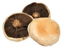 Large Flat Mushrooms Royalty Free Stock Images