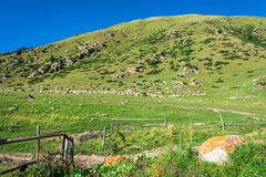 A large flock of sheep on the hillside, Kyrgyzstan. Royalty Free Stock Photography