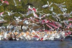 Large Flock of Water Birds Feeding Stock Photo