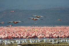 Large flock of wild birds Stock Photography