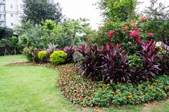 A large flower bed with flowers in the park. Park in the city, green lawn. Multicolored flowers grow in a flowerbed. Guangzhou Recreation Park royalty free stock photography
