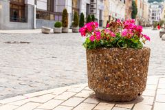 Large flower pot with blooming red geranium. Street decoration. City landscape design royalty free stock photography