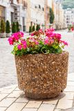 Large flower pot with blooming red geranium. Street decoration. City landscape design. Large flower pot with a blooming red geranium. Street decoration. City royalty free stock photography