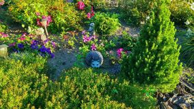 Large Flowerbed with hedgehog royalty free stock photo