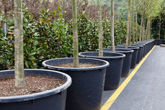 Large flowerpots Stock Photos