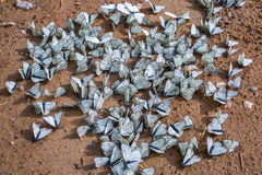 Free Large Fluorescent Butterfly Aporia Crataegi Lat. Aporia Crataeg Stock Photos - 96629513