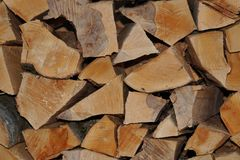 Large folded fresh logs of wood from the Caucasus Fagus oriental royalty free stock photo