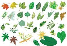 Large foliage set Stock Photos