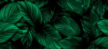 Green leaves for background and wallpaper
