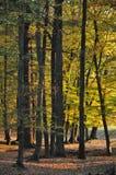 Large forêt d'arbres de feuille à la lumière du soleil d'automne/chute image libre de droits