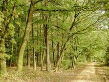 Large forêt d'arbres de feuille le long de la route moulue au jour tôt d'automne images stock