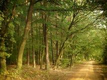 Large forêt d'arbres de feuille le long de la route moulue au jour tôt d'automne photos libres de droits