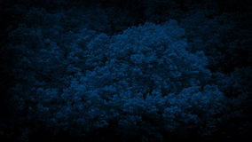 Large Forest Trees In Strong Wind At Night. Big trees shake in strong wind in the dark stock footage