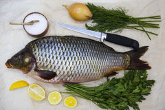 A large fresh carp live fish lying on a on paper background with a knife and slices of lemon and with salt dill Royalty Free Stock Images