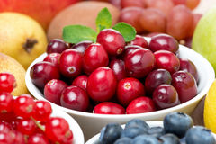 Large fresh cranberries, fruits and berries Stock Images