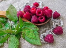 Large fresh red raspberry berries, poured into a wooden spoon.  royalty free stock photography