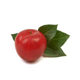 Large fresh ripe plum nectarine with green leaf, healthy ingredi Stock Photography
