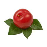 Large fresh ripe plum nectarine with green leaf, healthy ingredi Royalty Free Stock Photo
