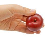 Large fresh ripe plum nectarine, healthy. Ingredient isolated on white background Royalty Free Stock Photography