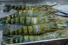 Large fresh water shrimps that are on ice. royalty free stock photo