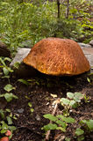 Large fungus Royalty Free Stock Photography