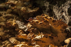 A large fungus grows on the side of a fallen tree Stock Photos