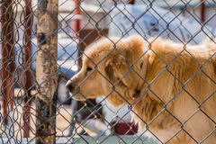 Large furry dog kept in cage Stock Images