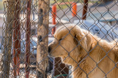 Large furry dog kept in cage Royalty Free Stock Image