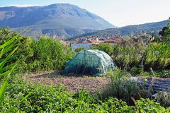 Village Garden With Green Shade House, Greece. A large garden in a rural Greek town, with a dark green shade house to protect growing plants from the sun and stock images