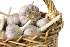 Large garlic bulbs in basket Stock Images