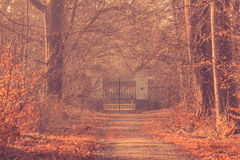 Large gate in a misty forest Royalty Free Stock Photos