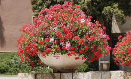 Large geranium pot. View of a large decorative pot with red geranium flowers Royalty Free Stock Photography