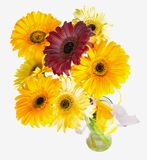 Large gerbera in a bouquet on a white background. Royalty Free Stock Images
