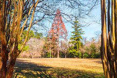 Large glade and leopard trees in Lullwater Park, Atlanta, USA. The large glade and leopard trees in the Lullwater Park in sunny autumn day, Atlanta, USA Stock Image