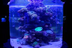 A large glass aquarium with a coral reef and lots of sea fish in the water stock photo