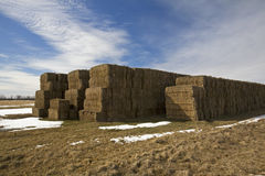 Large Golden Square Bales in Field Royalty Free Stock Images