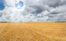 Large golden yellow stubble field. Which extends to the horizon. To this the sun shines out off a dense cloudscape Royalty Free Stock Images