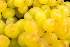 Large grapes cluster Stock Images