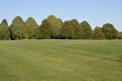 Large grass area with row of trees Royalty Free Stock Photos