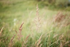 Large grass blades of grass royalty free stock photos