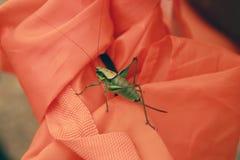 Large grasshopper Stock Photo