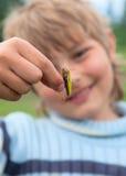 Large grasshopper Royalty Free Stock Photography
