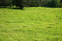 Large grassy field. Large area of green grass with trees in the distance Royalty Free Stock Image