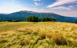 Large grassy meadow of Carpathians. Gorgeous landscape in fine afternoon weather. Apetska mountain in the distance Stock Images