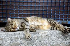 A large gray tabby cat lies on a stone floor near a fence with a lattice Stock Photo