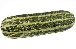 Large green bush marrow. Stock Images