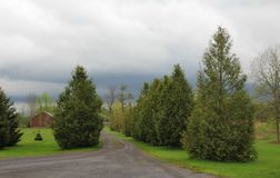 Large green cedar trees line both sides of country lane; red building in background. Large, mature green cedar trees line both sides of gravel covered country royalty free stock images