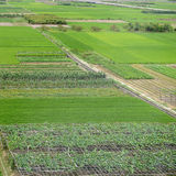 Large green farm land Stock Image