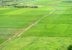 Large green farm land Stock Images