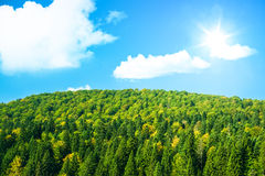 Large green forest with sunshine and blue sky Stock Photography